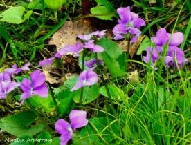 180-Violets_05032020_0031