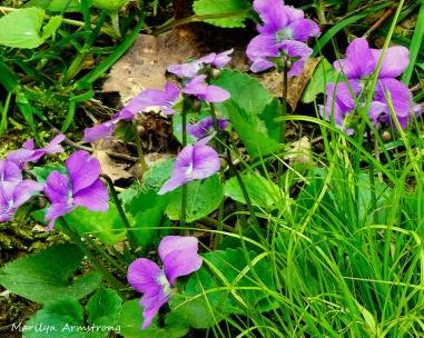 180-Violets_05032020_0032