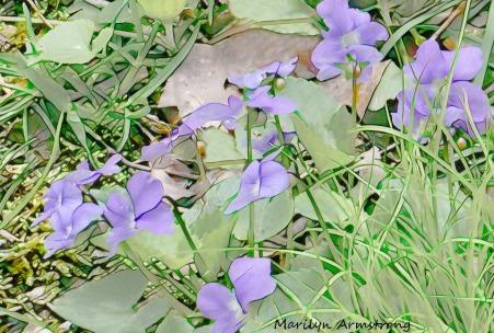 180-Violets_05032020_0041
