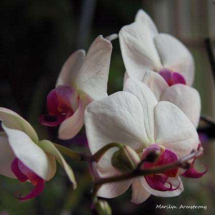 300-orchids_05102020_001