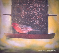 300-red-house-finch-birds-mid-may_05132020_011