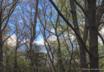 300-sky-and-spring-woods_05152020_016