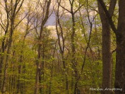 300-spring-woods_05152020_006