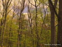300-spring-woods_05152020_006