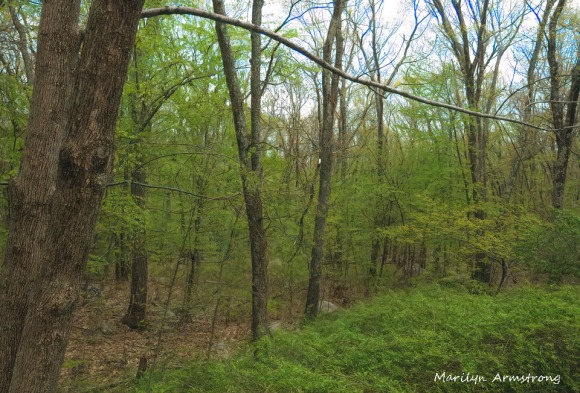 300-spring-woods_05152020_011
