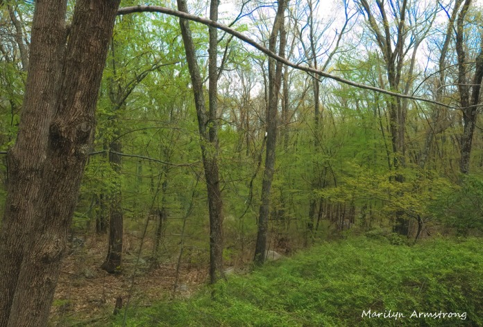 300-spring-woods_05152020_011