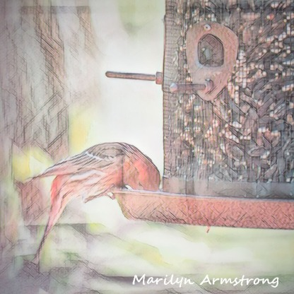 A red finch