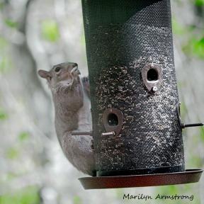 300-squirrel-05122029_-009
