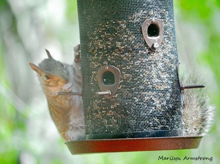 300-squirrel-05122029_-012