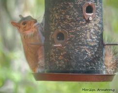 300-squirrel-05122029_-013