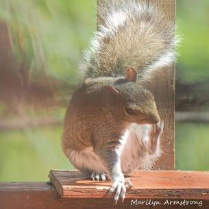 300-squirrel-05122029_-018