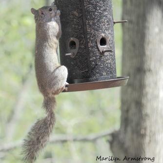 300-squirrel-05122029_-020