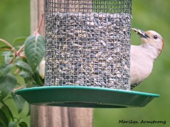 300-woodpecker-fuchsia_052320_085