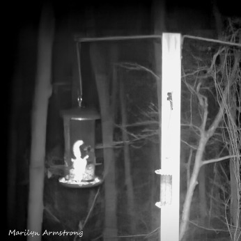 72-Square-BW-Flying-Squirrels_05022020_0024