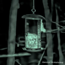 72-Square-Many-Flying-Squirrels_05012020_0124