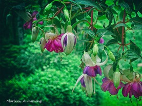 180-Fuchsia_060520_030
