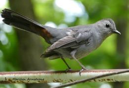 180-Gray-Bird-Mid-June-Garden_061520_013