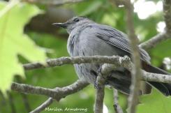 180-Gray-Bird-Mid-June-Garden_061520_023