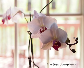 180-new-late-may-orchids_051320_153