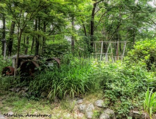 180-Wild-Mid-June-Garden_061520_030