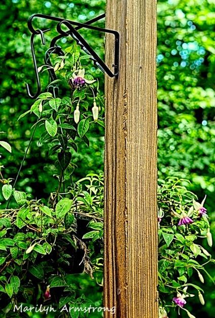 300-clawed-pole-vertical-birdfeeder_062520_005