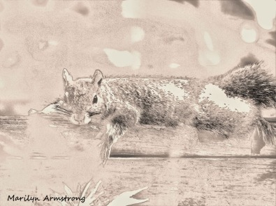 300-lounging-squirrel-at-rest_062520_012
