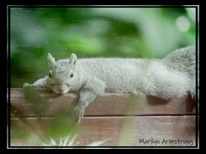 300-old-fashioned-squirrel-at-rest_062520_012