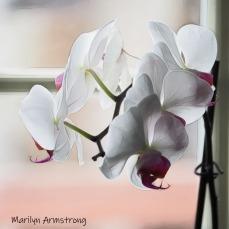 300-sqiare-orchids-indoor_garden_041820_056