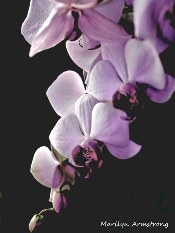 300-verticle-latest-orchids_06252020_001.