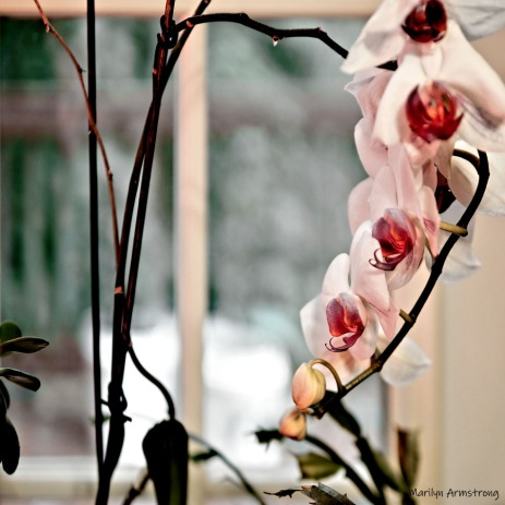 300-square-wilting-orchids_indoor_garden_062720_049