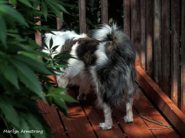 300-duke-from-the-back-on-deck_072920_005