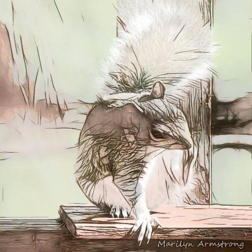 Fluffiest squirrel
