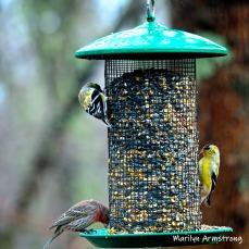 300-square-birds-are-back-03222019_167
