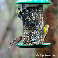 300-square-multi-colored-birds-are-back-03222019_166