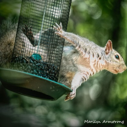 300-square-squirrel-crazy_072420_004