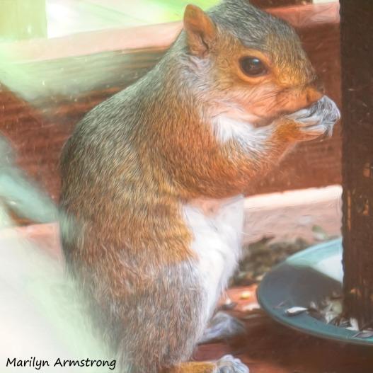 300-square-squirrel_071220_120