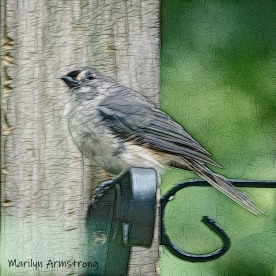 300-square-titmouse-birds-late-july_072220_016