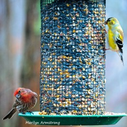 300-square-two-finches-are-back-03222019_126