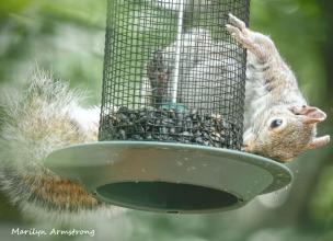 300-squirrel-crazy_072420_011