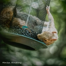 300-squirrel-crazy_072420_024