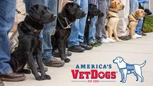 vet dogs in training