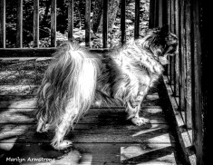 300-bw-shadowy-duke-on-deck_070520_007