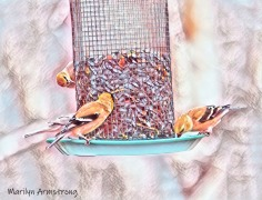 300-goldfinches-gray-day-finches_02042020_127