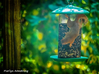 300-new-bokeh-squirrel-babies_082120_104A