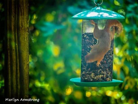300-new-bokeh-squirrel-babies_082120_104A
