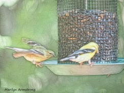 300-sketch-goldfinches_080520_008