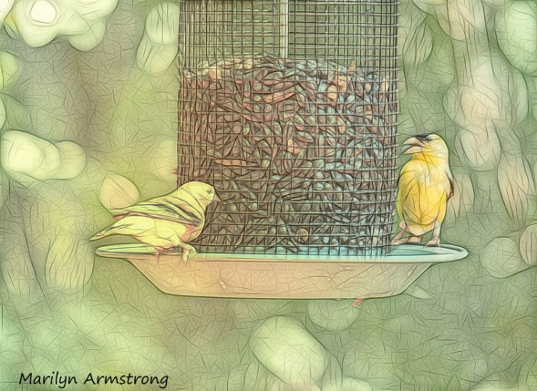 300-sketch-goldfinches_080520_022