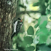 300-square-graphic-woodpecker-at-work_083020_050