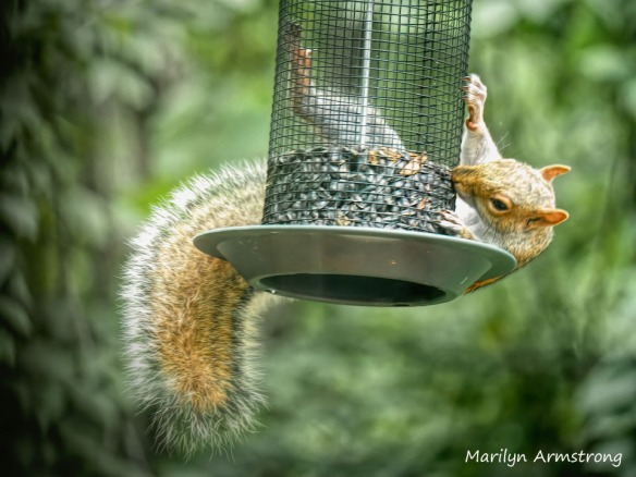 300-squirrel_080620_158