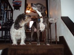 72-dogs-misc_27